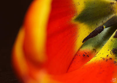 Photograph - Peering Into The Heart Of A Tulip by Lisa Knechtel
