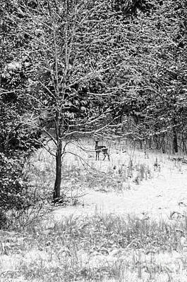 Photograph - Peering Out - Deer Bw by Mary Carol Story