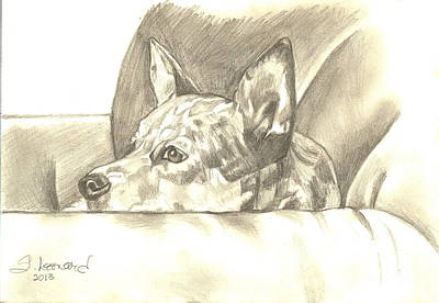 Cattle Dog Drawing - Peggy Jean by Suzanne Leonard