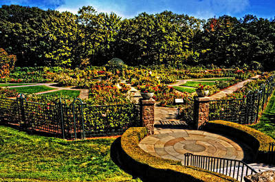 Photograph - Peggy Rockefeller Rose Garden by Mike Martin
