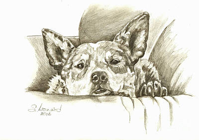 Cattle Dog Drawing - Pegilicious by Suzanne Leonard