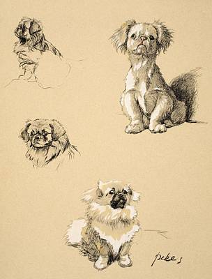 Pastel Pet Portrait Drawing - Pekes, 1930, Illustrations by Cecil Charles Windsor Aldin