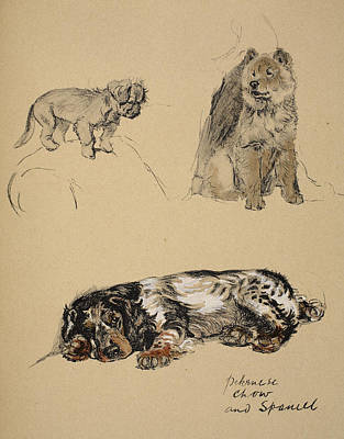 Chow Chow Drawing - Pekinese, Chow And Spaniel, 1930 by Cecil Charles Windsor Aldin