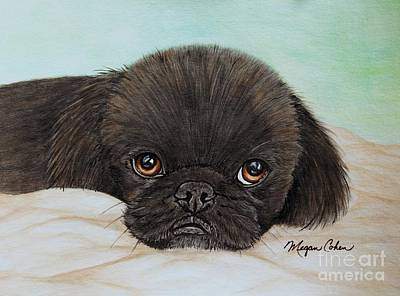Wall Art - Painting - Buddy The Pekingese by Megan Cohen