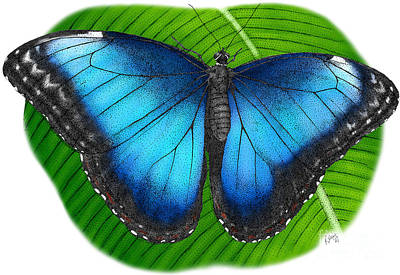 Photograph - Peleides Blue Morpho by Roger Hall