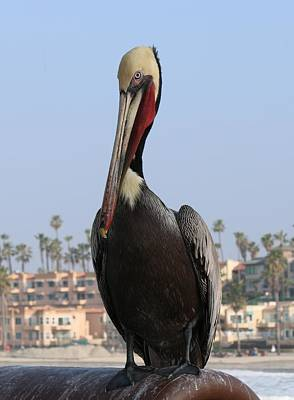 Photograph - Pelican - 2  by Christy Pooschke