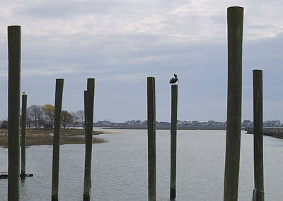 Photograph - Pelican And Pilings On The Inlet by MM Anderson