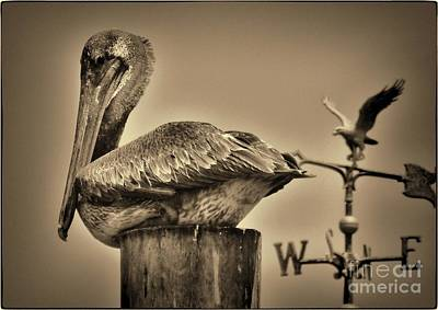 Pelican And The Weathervane Art Print by Pamela Blizzard