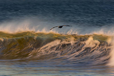 Photograph - Pelican And Wave  73a5229 by David Orias