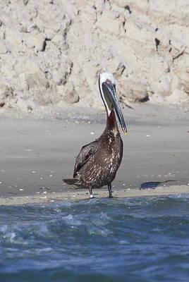 Beak Photograph - Pelican At Bird Island by Cathy Lindsey