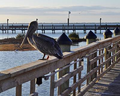 Photograph - Pelican At Marker 37 by Kristina Deane