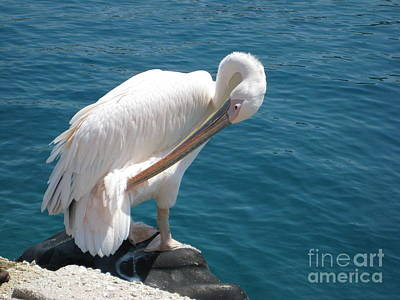 Photograph - Pelican At Mykonos by A K Dayton