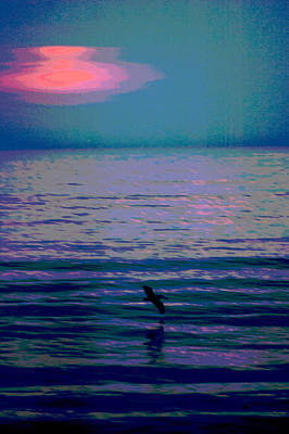 Lone Pelican Photograph - Pelican At Sunrise - Outer Banks by Frank Tozier