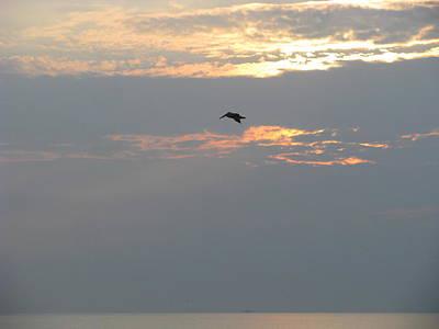 Photograph - Pelican At Sunrise by Ellen Meakin