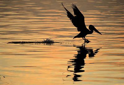 Pelican At Sunrise Art Print