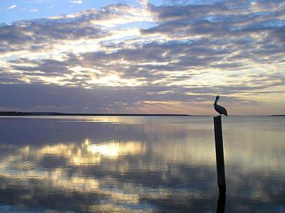 Photograph - Pelican At Sunset by Adam Johnson
