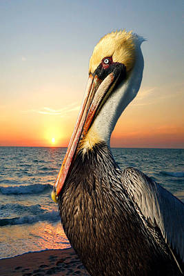 Photograph - Pelican At Sunset by Carmen Del Valle