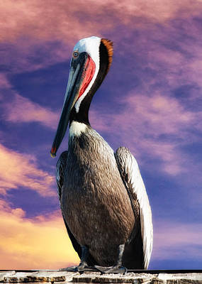 Photograph - Pelican At Sunset by OLena Art Brand