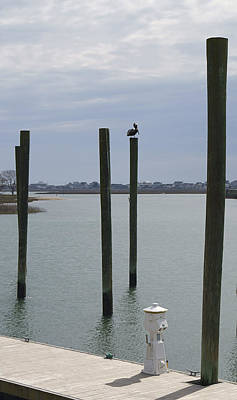 Photograph - Pelican Atop A Piling In Murrells Inlet by MM Anderson