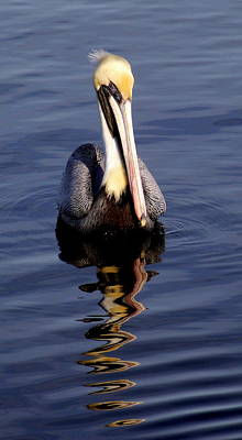 Photograph - Pelican Attitude 1 by Sheri McLeroy