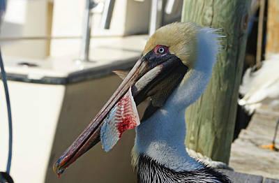 Pelicans Photograph - Pelican Bait 1 by Carmen Del Valle