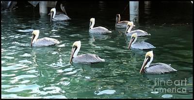 Photograph - Pelican Ballet by Claudette Bujold-Poirier
