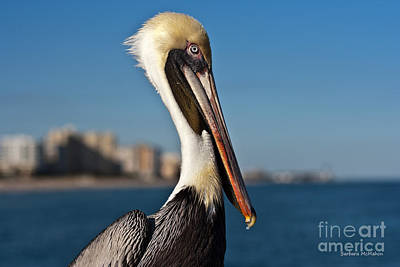 Art Print featuring the photograph Pelican by Barbara McMahon