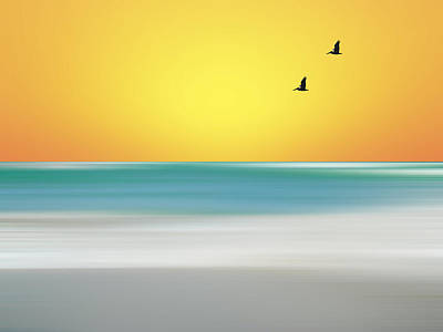 Photograph - Pelican Beach by Sean Allen