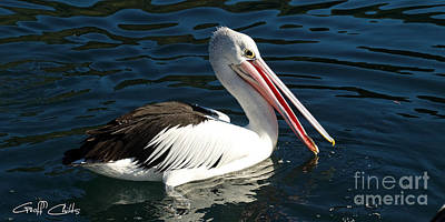 Colourfull Photograph - Pelican  Closeup  by Geoff Childs