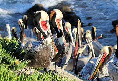Photograph - Pelican Colony by Jane Girardot