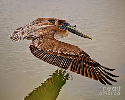 Photograph - Pelican Cruise by Mike Covington