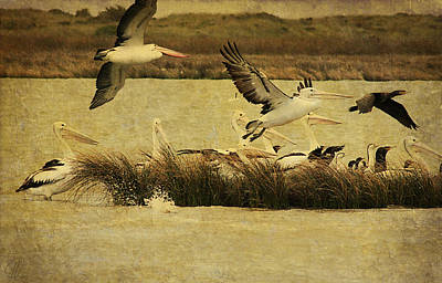 Digital Art - Pelican Days by Margaret Hormann Bfa