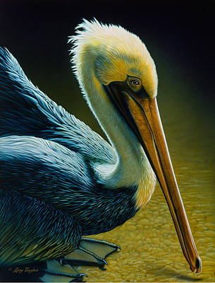 Pelican Detail Art Print by Larry Taugher