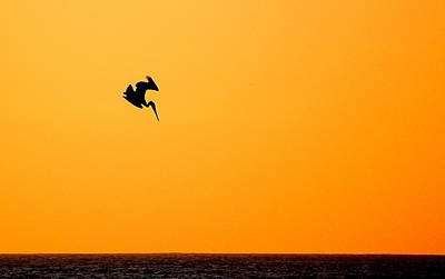 Print featuring the photograph Pelican Diving At Sunset by AJ  Schibig