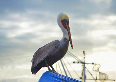 Photograph - Pelican by Donna Greene