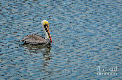 Photograph - Pelican Drifting On Rippled Water by Debra Martz