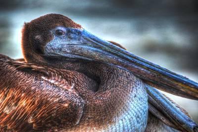 Digital Art - Pelican Eyeing Me by Michael Thomas