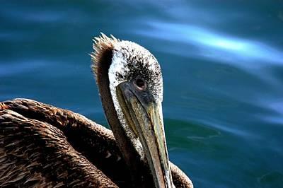 Pelican Eyes Art Print