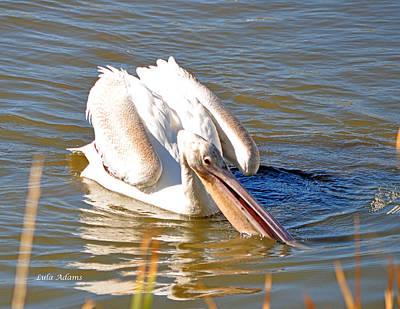 Photograph - Pelican Fishing by Lula Adams