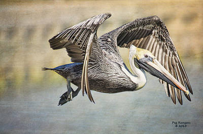 Photograph - Pelican Flight by Peg Runyan
