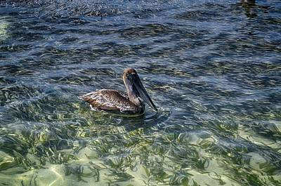 Photograph - Pelican Floater by Kristina Deane