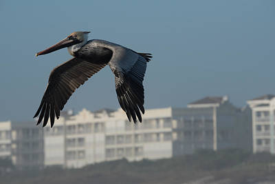 Photograph - Pelican Fly By by Michael Gooch