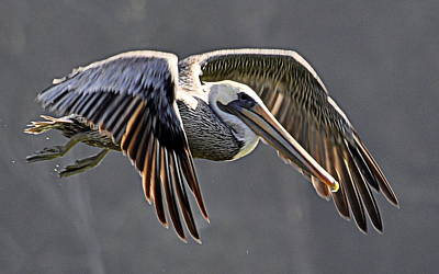 Photograph - Pelican Flyby by AJ  Schibig