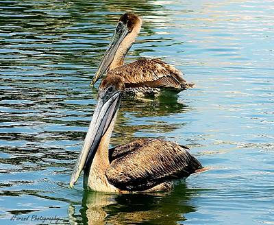 Photograph - Pelican Fun by Debra Forand