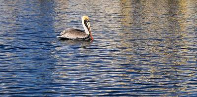 Photograph - Pelican Reflection II by Kristina Deane