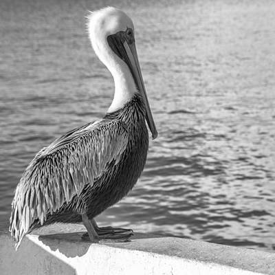 Photograph - Pelican In Cozumel by For Ninety One Days