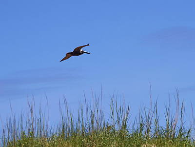 Feather Photograph - Pelican In Flight 10 by Cathy Lindsey