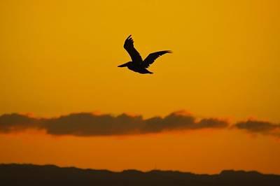 Photograph - Pelican In Flight by Ricardo J Ruiz de Porras