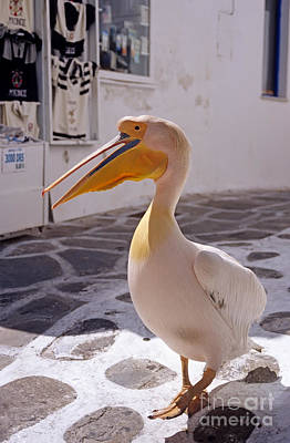 Photograph - Pelican In Mykonos Town by George Atsametakis