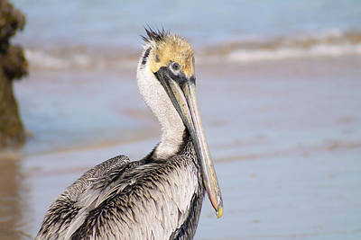 Photograph - Pelican In Need by Jessica Brown